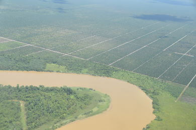 Vielfältiger Regenwald bildet die Lebensgrundlage der lokalen Bevölkerung. Heute bedecken aber Monokulturen mit Ölpalmplantagen zehntausende Quadratkilometer in Malaysia (Bild) und Indonesien. © Foto: Brot für alle / Miges Baumann