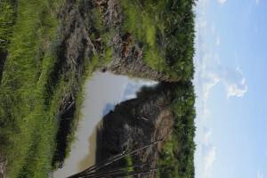 Statt Regenwald oder vielfältige Torfgebiete wuchern Plantagen auf Kalimantan, dem indonesischen Teil von Borneo. Auch die Familie in diesem Bauernhaus in der Nähe von Sungai Kelik findet bald kaum noch Platz für den Anbau ihrer Lebensmittel.  © Foto Brot für alle / François-de-Sury