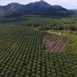 plantage luftbild drohne haus Aby Lei François de Sury