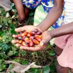 In Afrika (Bild aus Benin) gehört Palmöl zu den wichtigen Lebensmitteln und findet sich in vielen Gerichten.  ©Brot für alle / Mathias Raeber
