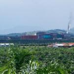 Im Zentrum vieler Ölpalmplantagen steht die Fabrik, um das Rohöl zu extrahieren. Für die Beschäftigten werden daneben eigene Dörfer gebaut, denn es sind häufig keine einheimischen Dayak sondern Menschen, die aus entfernten Regionen Indonesiens hergeholt wurden. ©Brot für alle / Urs Walter