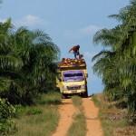 Die Ernte ist harte Arbeit für die Männer, welche die 25 bis 30 kg schweren Büschel auf die Lastwagen hieven.  ©Brot für alle / Urs Walter