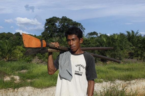 Für einen Tagelohn muss ein Arbeiter mit seinem scharfen Werkzeug 150 bis 250 Büschel von den Ölpalmen herunterholen.  ©Brot für alle / Urs Walter