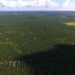 Wie ein Gespenst bedroht das Wachstum der Palmölindustrie in Kalimantan die ansässige Bevölkerung. Ständig werden neue Plantagen angelegt. ©Brot für alle / François de Sury