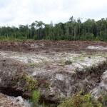 Auch in Torfgebieten werden Plantagen angelegt, obwohl das verboten ist. ©Brot für alle / Urs Walter