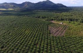 plantage-luftbild-drohne-haus-Aby-Lei-François-de-Sury